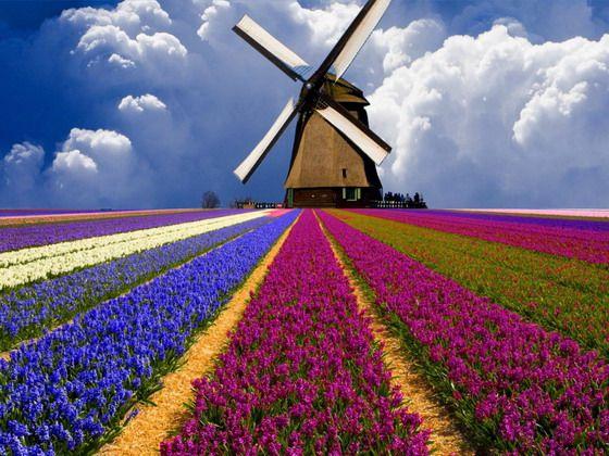 Sales & Market Development Manager – Netherlands